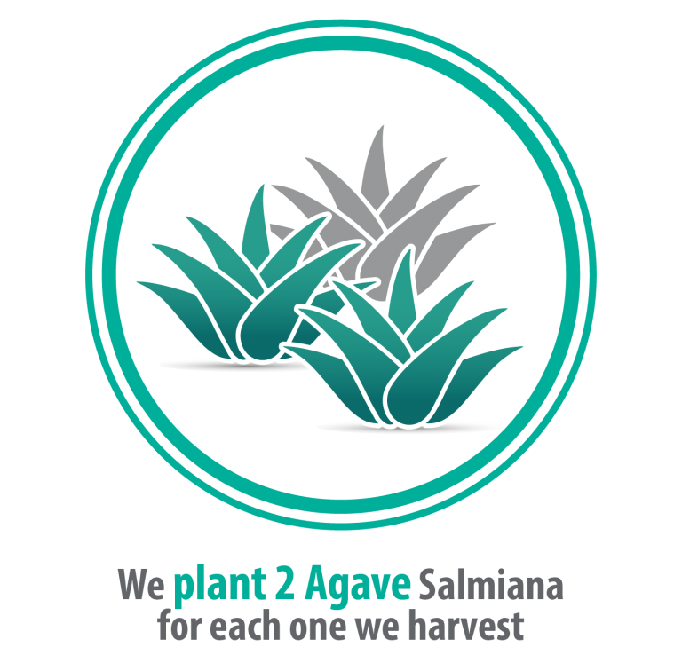 IMAGENES P-NEW WEB NATUREL_PLANT AGAVE